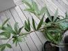 vanilla passionfruit