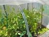 protected veggie planter
