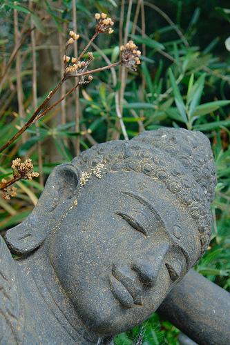 seeds of enlightenment