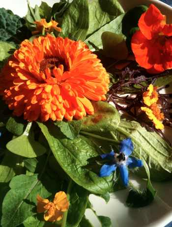 Flower salad: calendula, hyssop, nasturtium and borage