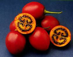 Tamarillo Teds Red
