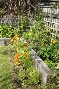 calendula, citrus and berries